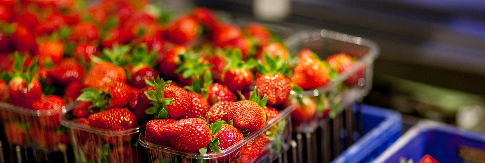 Food Safety -SurExport