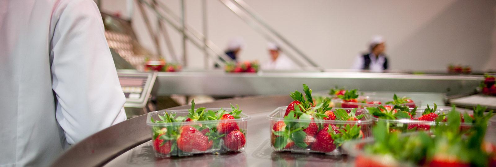 Productores de Berries - SurExport